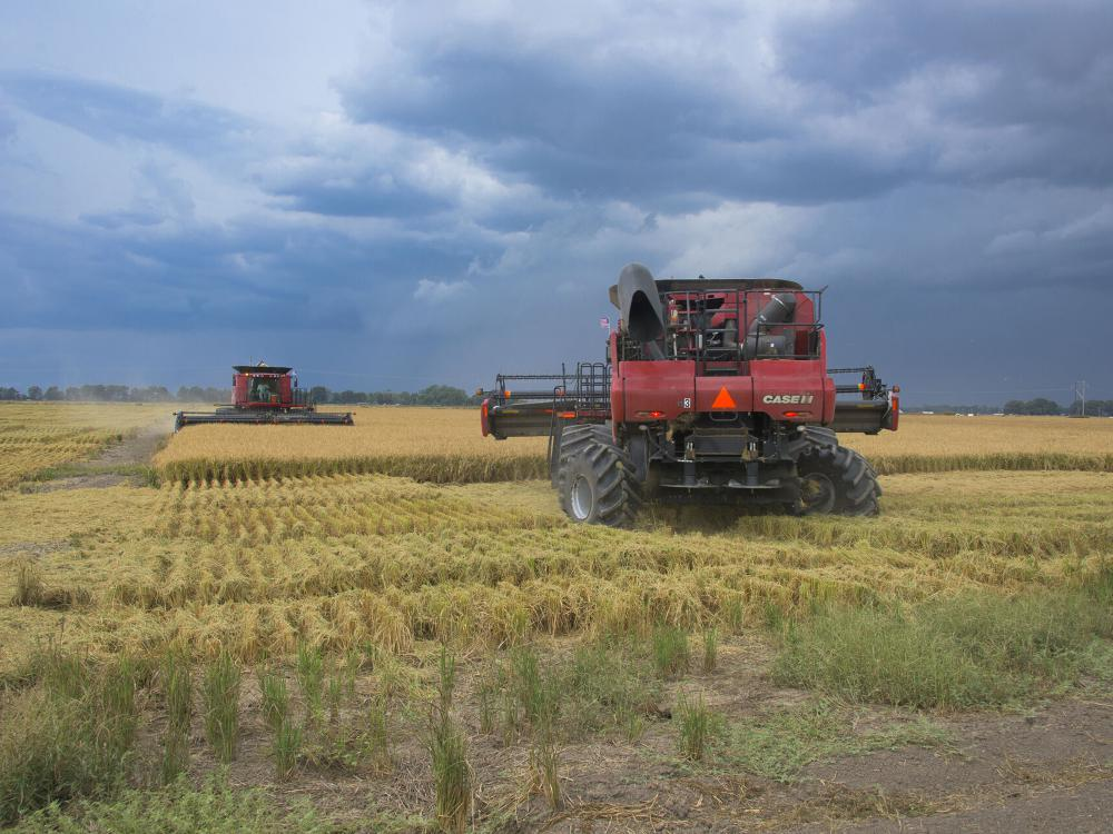 Two large, red farm machines sit in a partially harvested rice field under a dark-blue sky with lowering clouds