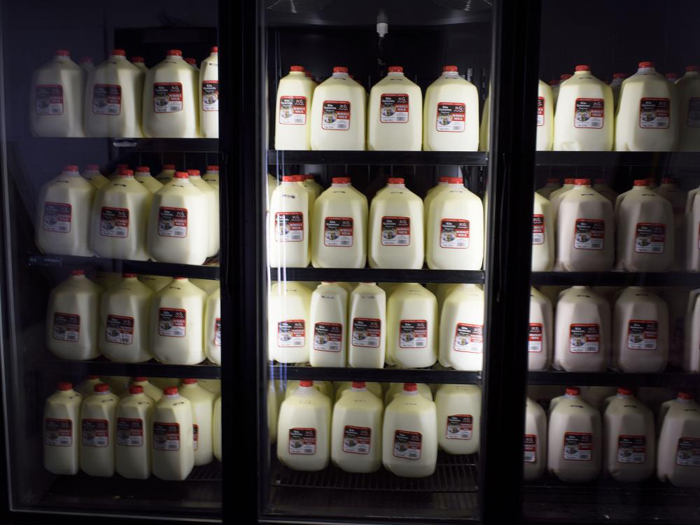 Three grocery store fridge doors are stocked with 1- and 2-gallon jugs of milk with red tops and labels.
