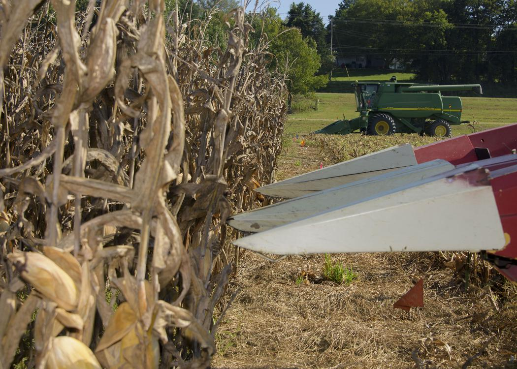 White ends on a piece of red machinery are poised in front of a row of dried, brown corn on a farm with a piece of green farm machinery in the background.