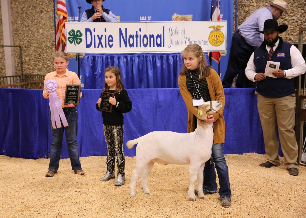 Young girl stands and holds up the head of a white goat with a brown head while two young girls stand in the background.