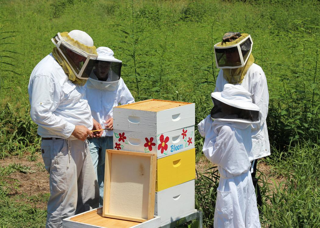 A beekeeper teaching three young people about keeping bees while looking at bee hives.