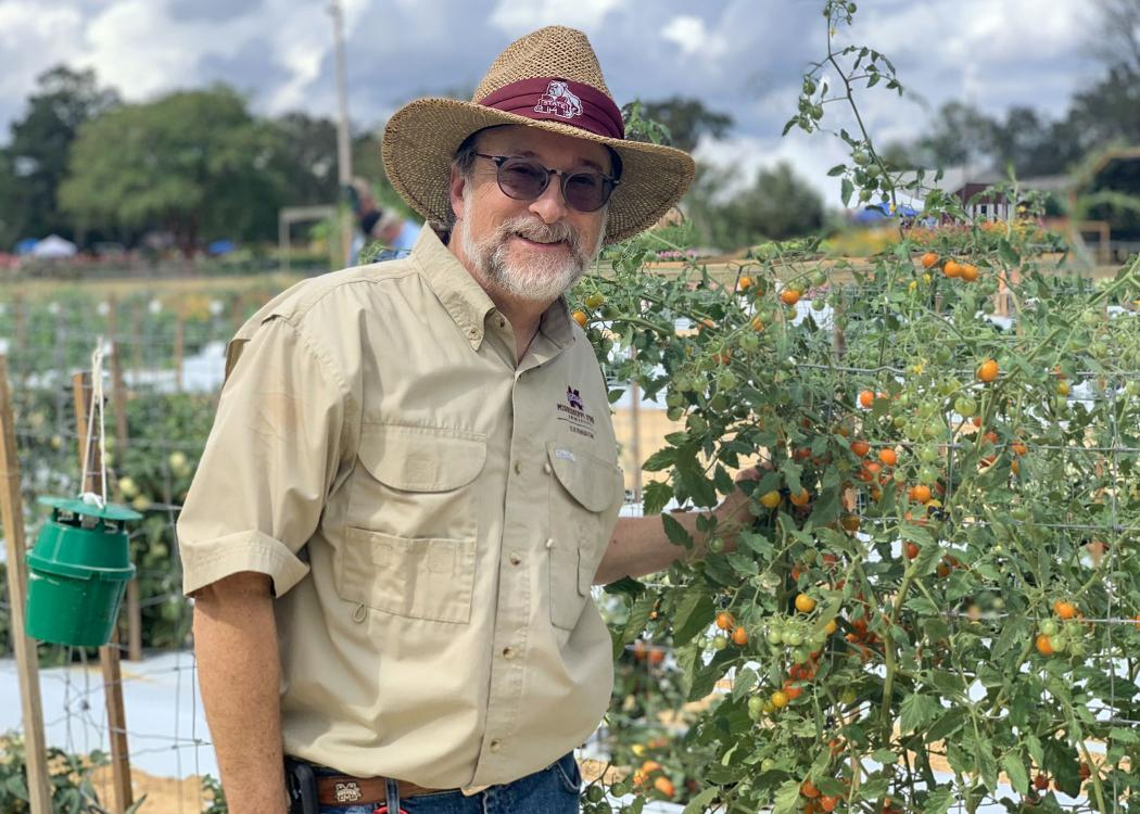 A man in a hat stands next to a bush covered in tomatoes growing inside a wire frame.