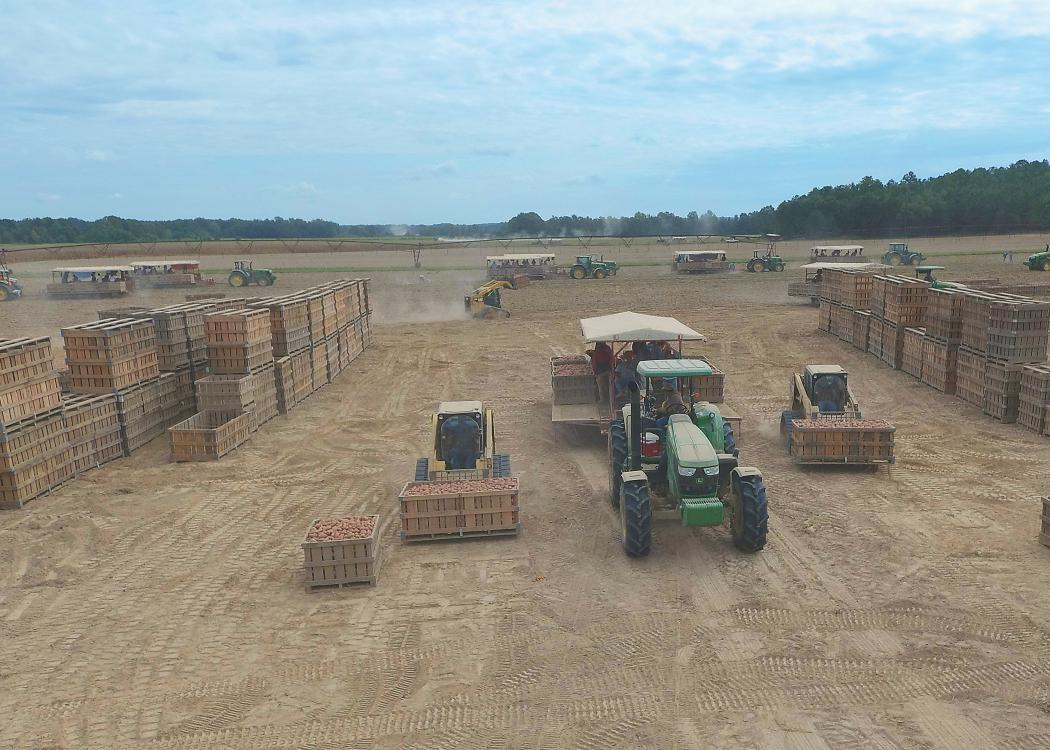 Overhead shot of a field with tractors and sweet potatoes in wooden bins.