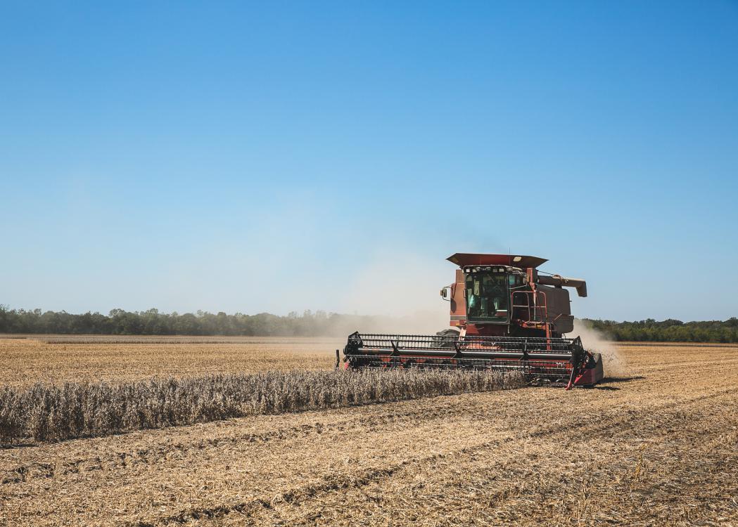 Combine picks soybeans in a field.