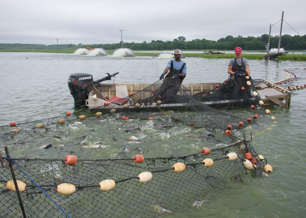 Large nets converge on a boat with two men aboard.