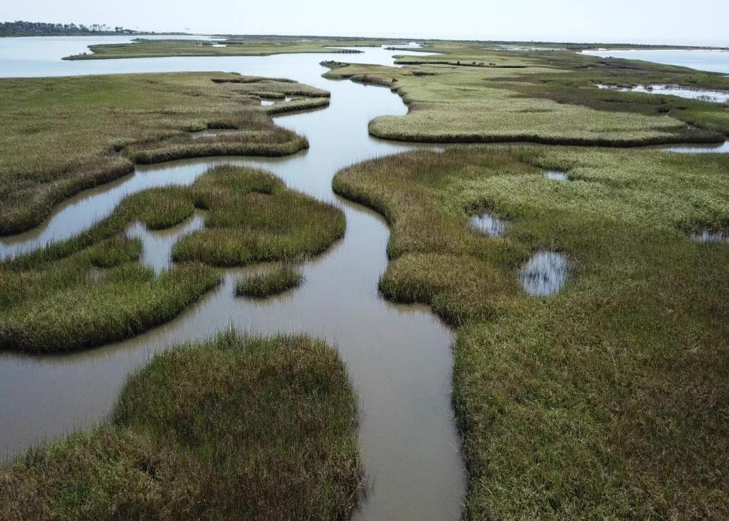 Salt marshes and water