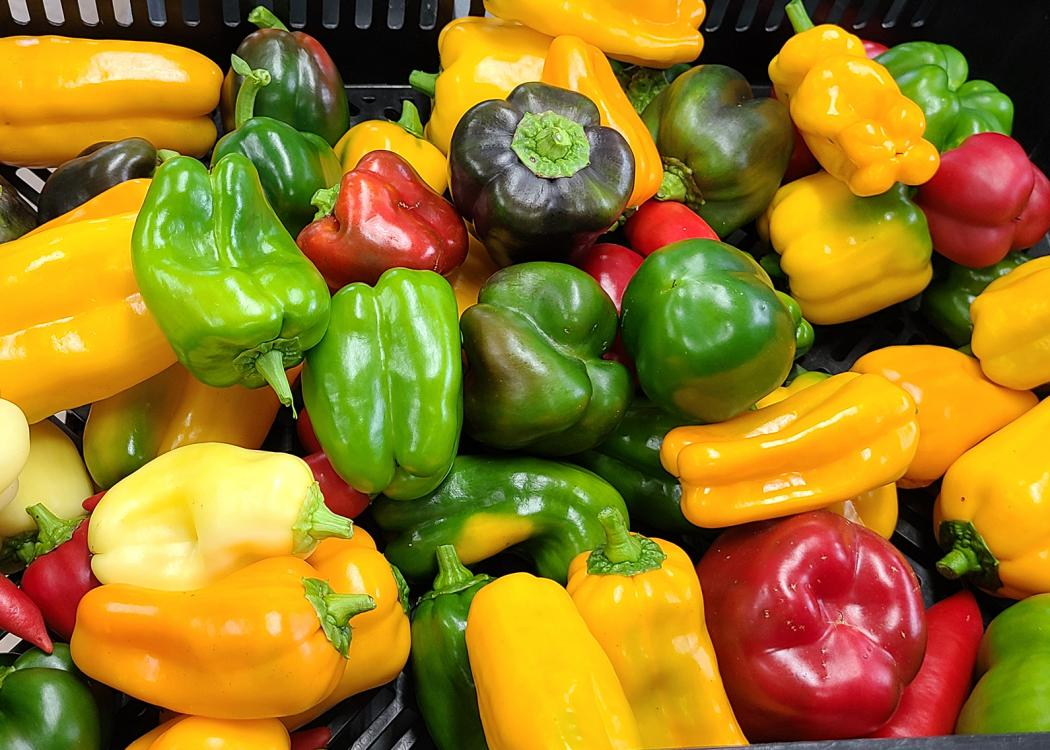 A basket holds an assortment of red, yellow and green peppers.