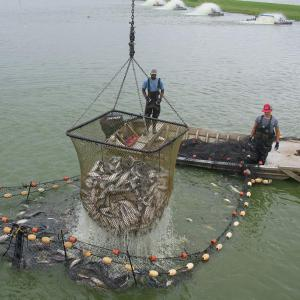 A catfish net rises in the foreground with 2 men standing on a boat in back.