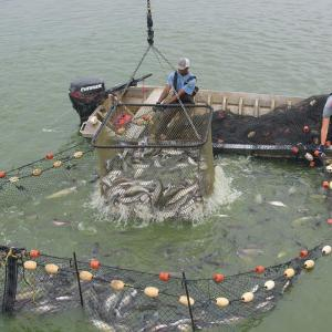Two workers on a boat pulling a net out of the water.