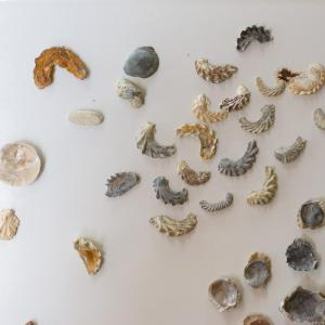 Shells, fossils, and bones arranged on a white background.