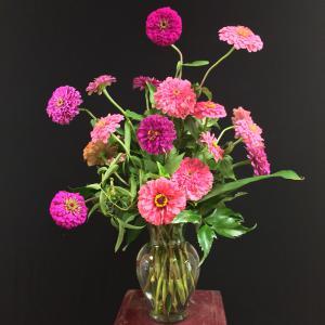 A vase arrangement of pink and violet zinnias.