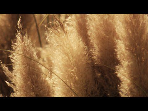 Winterizing Ornamental Grasses