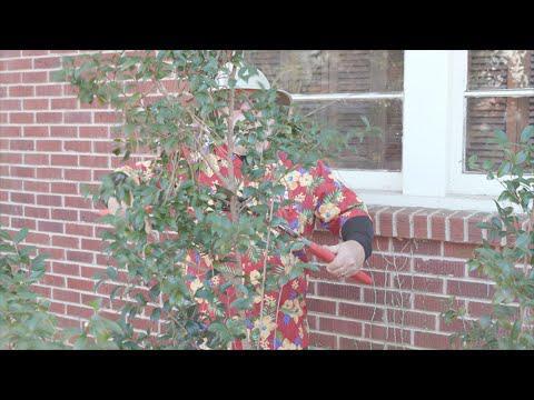 Pruning Camellias