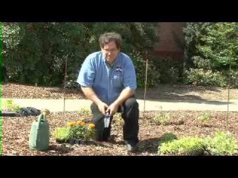 Vegetable and Ornamental Transplants  - MSU Extension Service