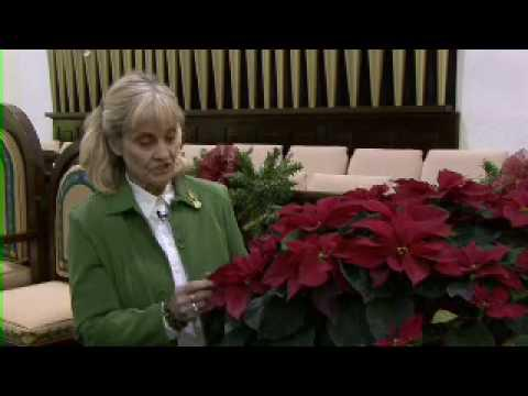 Selecting and Caring for Poinsettias- MSU Extension Service