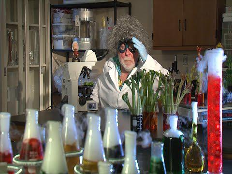 The Mad Plant Scientist