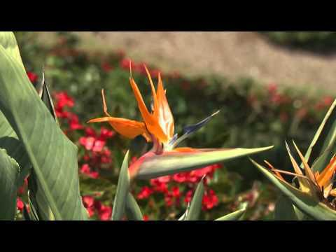Short, Medium, and Tall - Southern Gardening TV, October 24, 2012