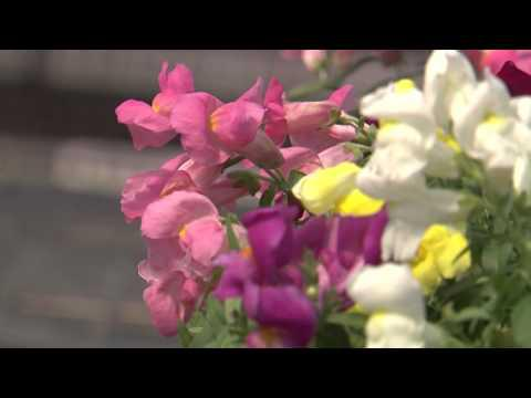 Montego Snapdragon, Southern Gardening TV - November 21, 2012