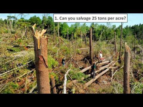 Timber Salvage and Regenerate or Manage Decisions
