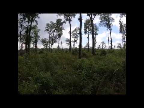 Diameter Limit Cutting vs Shelterwood Harvesting (Part 2)