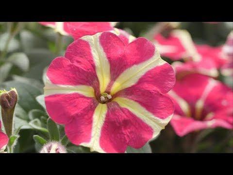 Year Long Valentines Plants