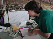 Mississippi State University animal scientist Rhonda Vann often sets up her laboratory in the corral at the Brown Loam Branch Experiment Station near Raymond. Part of her work is finding ways to help producers select the best quality animals for their herds.