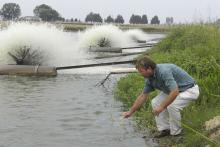Charlie Hogue, catfish production specialist with the Mississippi State University Extension Service, tests water from a catfish pond at Shirck Fish Farm in Noxubee County. (Photo by Tom Thompson)