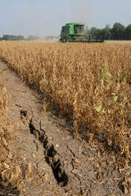 A combine harvests soybeans near a 33-inch deep crack in the soil in a field near Greenville. (Photo by Jim Lytle)