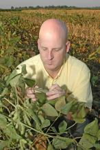 Mississippi State University Extension plant pathologist for the Delta, Tom Allen, inspects soybeans infested with Asian soybean rust in a sentinel plot in Stoneville. (Photo by Robert H. Wells)