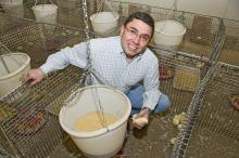 Alex Corzo, assistant poultry science research professor at Mississippi State University, carefully monitors chicks that eat feed containing an ethanol byproduct. (Photo by Marco Nicovich)