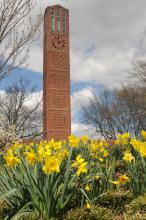 Daffodils frame the Chapel of Memories clock tower at Mississippi State University. (Photo by MSU Ag Communications/Kat Lawrence)