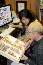 Experts at the Mississippi Entomological Museum manage the moth photographers' group website, the largest collection of moth images in the world. Here, museum director Richard Brown and Mississippi State University entomology researcher SangMi Lee compare moth samples to the images posted on the website. (Photo by Kat Lawrence)