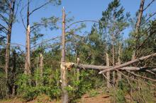 The April 27 tornadoes caused extensive damage to forestland in several Mississippi counties, resulting in an estimated $8.4 million in timber losses (Photo by Scott Corey)