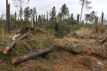 The tornadoes that tore through the state this past spring damaged about 74,000 acres of forestland in 22 counties, racking up timber losses of more than $30 million. (Photo by MSU Ag Communications/Scott Corey)