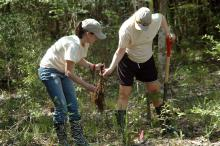 Tara Raynes (left) and Elaine Saxton were two of 24 volunteers from New South Access and Environmental Solutions who planted 2,000 Swamp Gum tree seedlings at the Crosby Arboretum's Gum Pond educational exhibit. The trees were donated by the company and planted by employees and their family members. (Photo by Susan Collins-Smith/MSU Ag Communications)