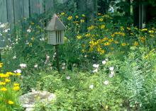 The butterfly garden at the Mississippi Museum of Natural Science in Jackson includes bee blossom, coreopsis, black-eyed Susan and purple coneflower. (Photo by MSU Ag Communications/Susan Collins-Smith)
