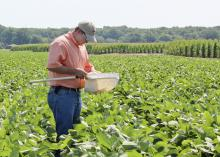 James Locke, a senior at Mississippi State University from Greenwood, uses a sweep net to monitor a soybean field for insects while serving as an intern with Jimmy Sanders, Inc. in Tchula, Miss. (Photo by MSU Ag Communications/Keri Collins Lewis)