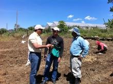 During a recent trip to the Dominican Republic, Mississippi State University scientist Barakat Mahmoud (left) talked to a local Extension agent and a potato farmer about harvesting techniques that reduce the chances of bacterial contamination and food-borne illness. (Submitted Photo)