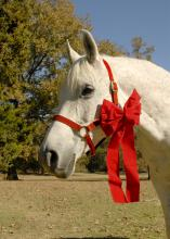 A horse can be a magical gift, but a first-time owner needs to learn about the work and money involved with this beautiful, long-term companion. (Photo by MSU Ag Communications/Linda Breazeale)
