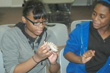Nakita Johnson (left) and Jada Hardy get an up-close look at an Eastern hog-nosed snake, one of the state's non-venomous species, during the Wildlife Youth Day at the Coastal Plains Experiment Station Nov. 16. (MSU Ag Communications/Susan Collins-Smith)