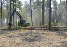Forestry is Mississippi's third-largest agricultural commodity in 2012, with a preliminary year-end harvest value estimated at $1.03 billion, an 8 percent increase from 2011. (MSU Ag Communications file photo/Scott Corey)
