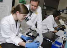 Jennifer Cain, a class of 2016 summer research student at Mississippi State University's College of Veterinary Medicine, and Dr. David Smith, her mentor, examine a test sample for a reproductive disease of cattle. (Photo by MSU College of Veterinary Medicine/Tom Thompson)