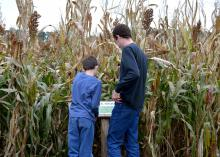 Maps can be helpful for all ages finding their way through corn mazes, as these brothers discovered in northwest Arkansas on Oct. 26, 2013. Landowners with an interest in agritourism also need guidance through the maze of liability issues. (Photo by MSU Ag Communications/ Linda Breazeale)