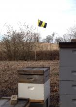 To increase awareness of honeybee hives located near agricultural fields, the Mississippi Honey Bee Stewardship Program recommends beekeepers post Bee Aware flags, such as this one spotted at Mississippi State University's H. H. Leveck Animal Research Center on Jan. 31, 2014. (Photo courtesy of Angus Catchot)
