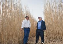 Mississippi State University research scientist Brian Baldwin, left, explains uses for giant miscanthus during a campus visit on March 21, 2014, with Leonard Gianessi, consultant to the CropLife Foundation in Washington, D.C. (Photo by MSU Ag Communications/Kat Lawrence)