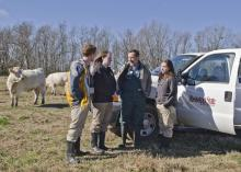 Lauren Bright, second from left, discusses the nutritional value of winter grasses for cattle with fellow Mississippi State University students Seth Jenkins and Lauren Comstock and Dr. David Smith. In May, Bright will be the first graduate of the college's combined DVM-Ph.D. program. (Photo by MSU College of Veterinary Medicine/Tom Thompson)