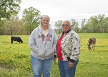 Cattle producers Genette Hunt and Sarah Harvill of Franklin County use sustainable production methods, such as rotational grazing, to make their business more profitable while reducing their workload. The two began a joint farming operation in 1987 after retiring from the medical field. (Photo by MSU Ag Communications/Kat Lawrence)