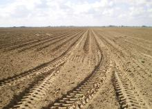 Tire tracks crisscross this Bolivar County, Mississippi, field. Heavy farm equipment can compress soil underground, making it difficult for plants to reach moisture and nutrients. (Photo by MSU Extension Service/Laura Giaccaglia)