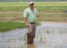 Bobby Golden, Mississippi Agricultural and Forestry Experiment Station researcher, stood in a rice field as he summarized crop conditions and discussed the challenges producers face. Golden was one speaker in the half-day event June 17, 2014 at the Delta Research and Extension Center in Stoneville, Mississippi, that focused on the state's major row crops. (Photo by MSU MAFES/David Ammon)