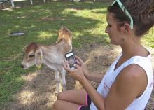 Paula Brown captures a photo of a calf for her business's Facebook page at Brown Family Dairy in Oxford, Mississippi, June 26, 2014. (Photo by MSU Ag Communications/Kevin Hudson)